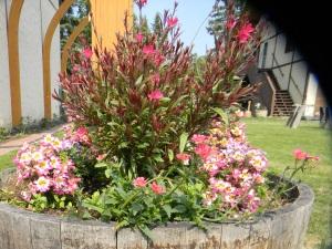 Pink flowers in yrad